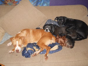 Four of my dogs